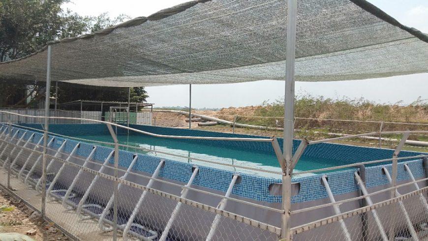 Bàn giao công trình hồ bơi trường học tại trường tiểu học Đồng Tháp
